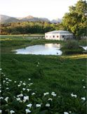 Overberg Bed and Breakfast and Self Catering Accommodation Elgin | Lilybank Cottage | Western Cape South Africa