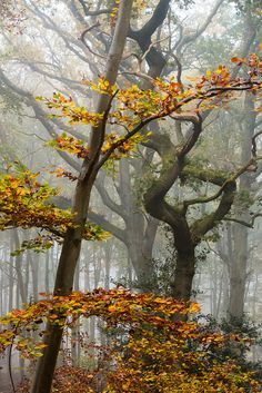 "wanderthewood: "" Prince's Coverts, Surrey, England by Wazzerphuk """