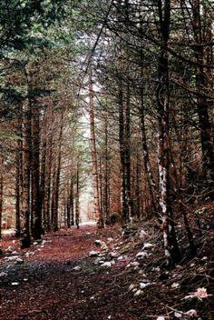 Η καταπράσινη φύση της Παύλιανης, στην Φθιώτιδα θα σας κάνει να την αγαπήσετε.