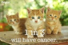 Because 1 in 3 dogs and cats will be affected by cancer Petplan is spreading awareness and encouraging pet owners to be informed about pet cancer's causes, symptoms and treatments. #petcancer
