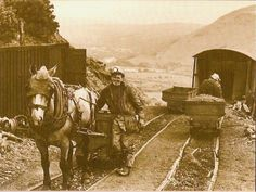 """PIT PONIES still working in 1981 at a small private mine in South Wales-12""""x10"""" £15.00"""