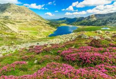 Beautiful Rhododendron Flowers And Bucura Mountain Lakes,Retezat Mountains,Romania Stock Image - Image of europe, alpine: 42461827 Beautiful Places To Visit, Beautiful World, Places To See, Amazing Places, All The Bright Places, Places Around The World, Top Photos, Hadrian's Wall, Parque Natural