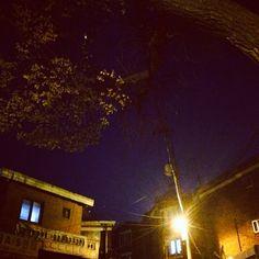 .@d__u1230 | #춥다#가로등#나무#밤#저녁#하늘 | Webstagram