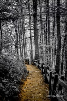 ✯ Forest Path  Possibly use hardwood chips obtained from local tree service. (They haul them to the landfill.)