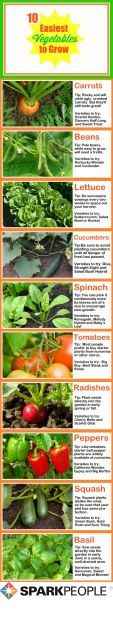 The 10 EASIEST Vegetables to Grow: Make this THE YEAR you start that vegetable #garden   via @SparkPeople #gardening