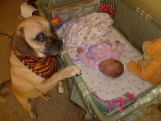 29 Dogs Falling In Love With The New Baby