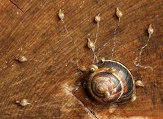 snails being born