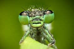 Macro Photography, Canon, Amazing, Green, Animals, Animales, Cannon, Animaux, Animal