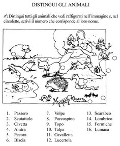 distingui gli animali classe seconda.jpg