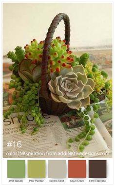 200 pcs/bag Succulents Seeds, mini bonsai seeds, Indoor Miniature Garden Bonsai Flower Seeds Potted Plants Purify the Air Succulent Seeds, Succulent Gardening, Succulent Terrarium, Container Gardening, Organic Gardening, Succulent Display, Succulent Bouquet, Gardening Books, Indoor Gardening