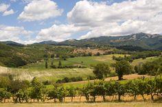 Terre del vino - Lazio | Svinando Magazine |