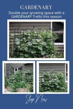 Garden Club, Herb Garden, Vegetable Garden, Garden Art, Garden Design, Best Potted Plants, Plants That Repel Bugs, Cd Crafts, Frame Crafts