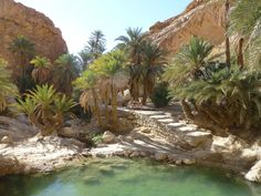 oasis-Douz