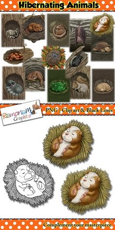 This Hibernating Animals Clip art set consists of realistic images.   There are 14 animals each has been drawn in the typical place they would choose to hibernate.