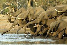 A big plus side to a low season on safari.