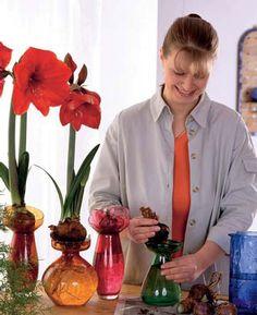 Ak túžite po rozkvitnutých  amarylkách na vianočnom  stole, nezabudnite, že práve  v tomto období je najvyšší  čas na nákup cibuliek, ktoré  už mnohé obchody ponúkajú  vo svojom sortimente.  Stačí, ak ju zasadíte do črepníka  alebo necháte vykvitnúť v sklenenom  pohári. Pri dobrej starostlivosti  vás obdarí svojimi magickými  kvetmi.