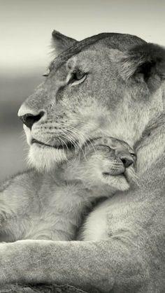 13. 12. 19. Lionne et son lionceau