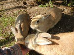 Okunoshima Japan. Or Usagi Jima  ( rabbit island ). Known for rabbits and mustard gas