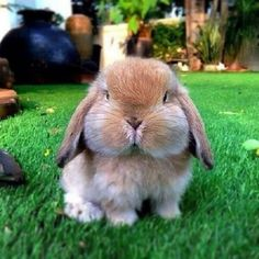 I'll hold my breath until you give me a carrot.