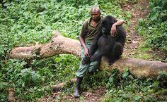 F5 - Bichos - Santuário cuida de gorilas órfãos no Congo - 18/07/2012