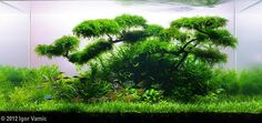 planted aquarium tree