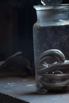 abandoned, decay, urbex, abandonado, beauty in decay, beauty, old, neglected, black, b, color, snake, jar, light, window, delicate, animal,