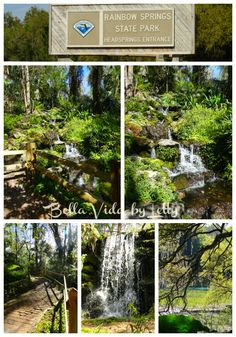 One of the Most Beautiful Places in Florida Rainbow Springs State Park - Bella Vida by Letty Places In Florida, Visit Florida, Florida Vacation, Florida Travel, Usa Roadtrip, Places To Travel, Places To See, Florida Adventures, Nature