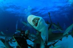 Shark feeding dives in the Bahamas! I did this with my Mom! So scary, yet so interesting to see.
