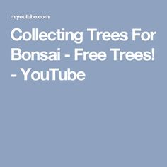 Collecting Trees For Bonsai - Free Trees! - YouTube