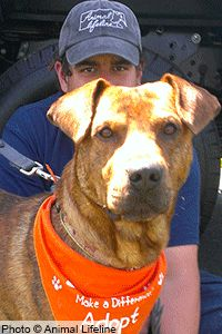 Give Dogs a Ride to Rescue at The Animal Rescue Site