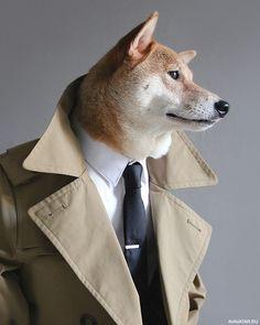 #dogs, #ties, #animals, #pictures, #собаки, #галстуки, #животные, #картинки https://avavatar.ru/image/11492
