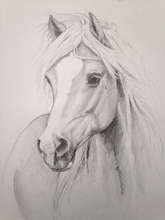 Horse sketch drawing.  #horse  #sketch  #drawing