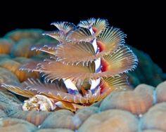 unseen sea creatures pictures most beautiful unseen sea creatures ...