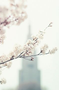 NYC for Spring  So beautiful! <3 this would be a great picture to print and hang up.