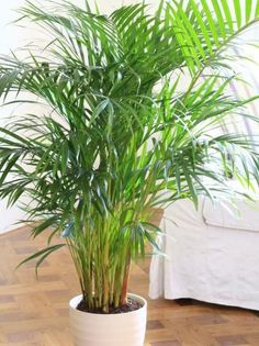 Fronds of Tropical Foliage Lightens Dark Corner