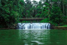 Malanda Falls swimming hole on the Atherton Tablelands near Cairns, Australia. Photo:  Tiffonee_Wallis