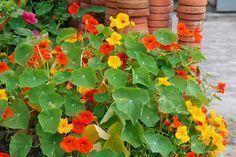gyógynövények gyűjteménye pikkelysömörhöz