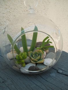 ~C~ Mini rock garden orb kit with succulents