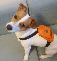 A super cute dog with a super cute doggie backpack! Made my Mailo on Etsy! I want to steal this dog!!! #etsy #handmade #dogs http://mailo.etsy.com