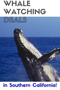 35 Whale Watching Deals in Southern California!  Cities included are Orange County, Los Angeles, Long Beach, Venura, San Diego, Oxnard and more.  Peak whale watching season is Dec.- January and again Feb. - April.