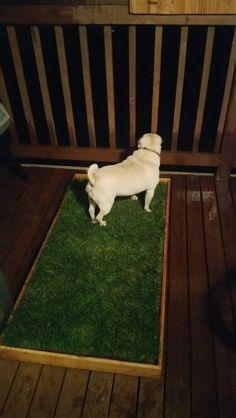 Potty sod pad box for your apartment deck. This box fits a roll of sod . - How to make a dog toilet in the Garden Puppy Toilet Training, Potty Training Puppy Apartment, Porch Potty, Apartment Deck, Dog Bathroom, Dog Toilet, Dog House Plans, Dog Spaces, Shelter