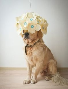 Flower lampshade turns into a just as gorgeous dog fascinator. Made by Katya Kozlova in Russia using paper and Makedo