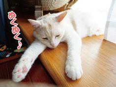 猫らの弱点|うにオフィシャルブログ「うにの秘密基地」Powered by Ameba