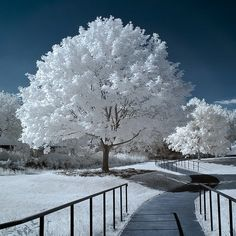 Inspiration For Landscape photography Picture Description A Showcase of 20 Absolutely Amazing Landscape infrared Photography… Winter Szenen, I Love Winter, Winter Magic, Winter Time, Winter Christmas, Winter Walk, Thanksgiving Holiday, Infrared Photography, Tree Photography