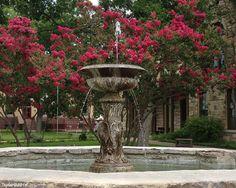 A closer look... Fountain and Myrtles in Fredericksburg, Texas!