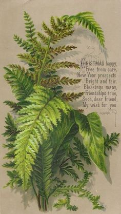 An poster sized print, approx (other products available) - Green and brown ferns on a Christmas card, with a seasonal verse. Date: circa - Image supplied by Mary Evans Prints Online - Poster printed in the USA Vintage Ephemera, Vintage Cards, Vintage Postcards, Vintage Images, Victorian Christmas, Vintage Christmas Cards, Christmas Greeting Cards, Christmas Greetings, Carpe Diem