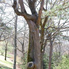 Marriage tree by kelliclark