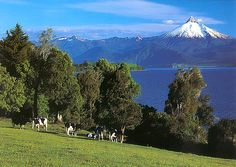 Frutillar, X Región de Los Lagos - SkyscraperCity Sur Chile, Lake District, Wonders Of The World, South America, Wander, Landscape Photography, Tourism, Beautiful Places, Nature