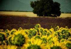 Agriculture en couleur   Flickr - Photo Sharing!