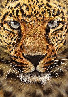 Leopard by Jason Morgan